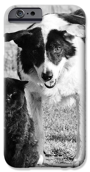Farm Cat and Border Collie iPhone Case by Thomas R Fletcher