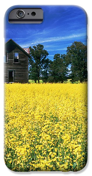 Canola Field iPhone Cases - Farm House And Canola Field, Holland iPhone Case by Dave Reede