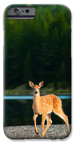 Camping iPhone Cases - Fawn iPhone Case by Sebastian Musial