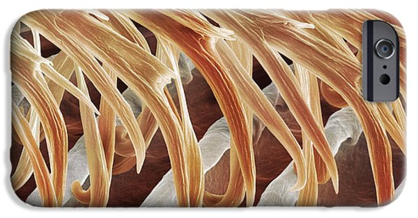 Hirundo iPhone Cases - Feather Barbules, Sem iPhone Case by Power And Syred