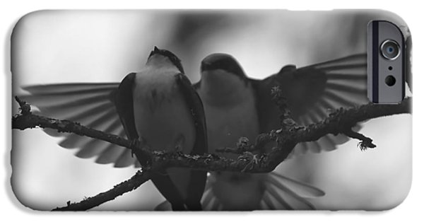 Swallow iPhone Cases - Feathered Encounter iPhone Case by Angie Vogel