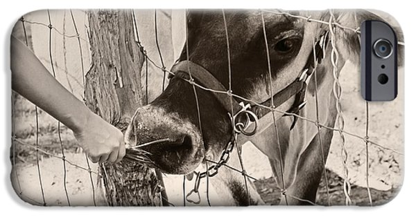Fed iPhone Cases - Feeding Baby Cow On Farm iPhone Case by Tracie Kaska