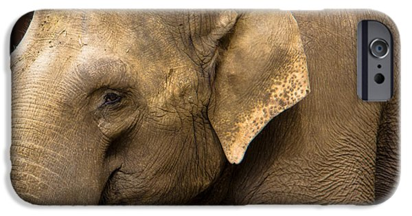 Elephants Pyrography iPhone Cases - Feeling sad iPhone Case by Darren Langlois