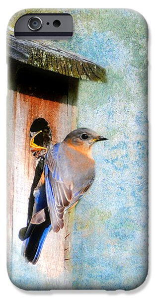 Female Eastern Bluebird At Nesting Box iPhone Case by Jai Johnson