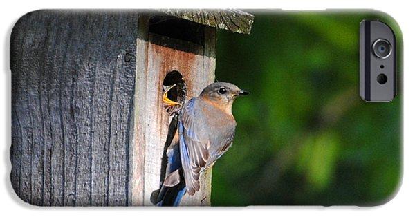 Female Eastern Bluebird IIi iPhone Case by Jai Johnson