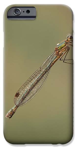 Emerald Green iPhone Cases - Female Emerald Damselfly iPhone Case by Andy Astbury