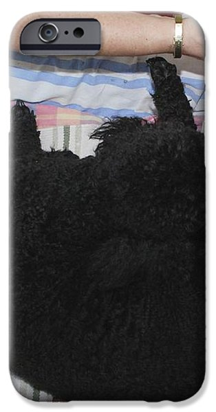 Female Poodle Gives Birth iPhone Case by Photostock-israel