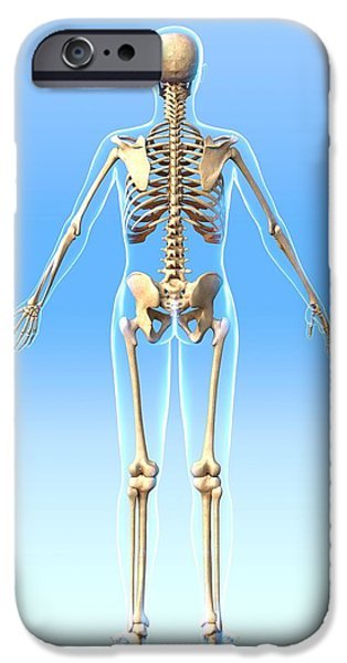 Female Skeleton, Artwork iPhone Case by Roger Harris