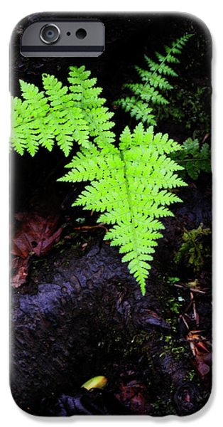 Upstate New York iPhone Cases - Fern Along Kaaterskill iPhone Case by Rick Berk