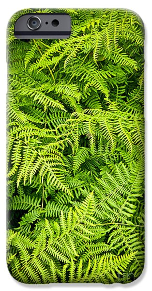Forest Detail iPhone Cases - Fern iPhone Case by Elena Elisseeva