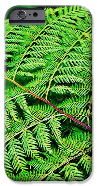 Fern Frond iPhone Case by Kaye Menner