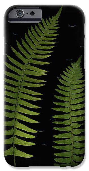 Fern Leaves With Water Droplets iPhone Case by Deddeda
