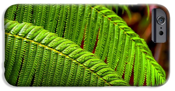 Fauna iPhone Cases - Fern iPhone Case by Ryan Wyckoff
