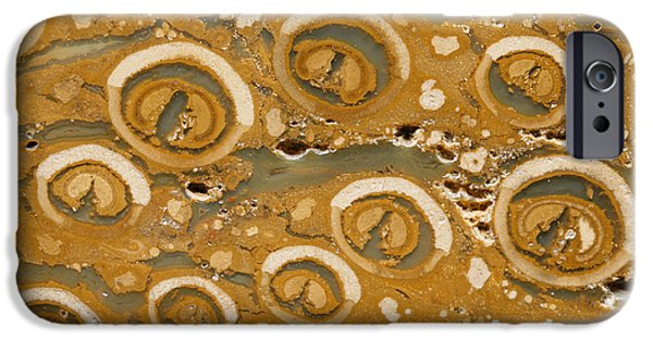 Palaeontology iPhone Cases - Fern Stalk Fossil iPhone Case by Dirk Wiersma