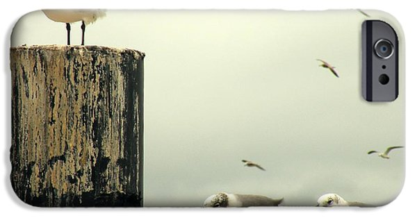 Flying Seagull iPhone Cases - Ferry Hypnosis iPhone Case by Joe Jake Pratt
