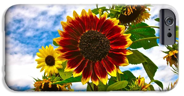 Sunflower Photograph iPhone Cases - Field Day iPhone Case by Gwyn Newcombe