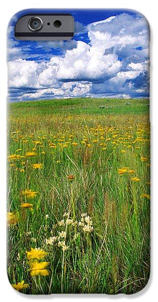 Field Of Flowers, Grasslands National iPhone Case by Robert Postma