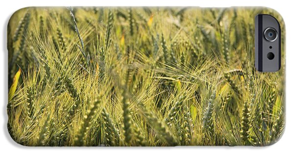 Fields iPhone Cases - Field of Green iPhone Case by Mike McGlothlen
