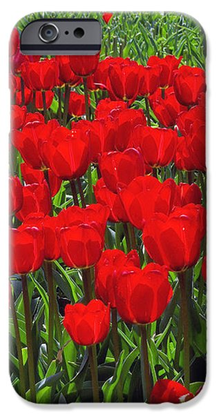 Field of Red Tulips iPhone Case by Sharon  Talson