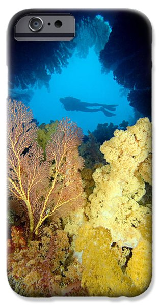 Fiji Underwater iPhone Case by Dave Fleetham - Printscapes