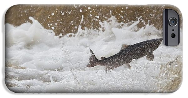 Design Pics - iPhone Cases - Fish Jumping Upstream In The Water iPhone Case by John Short