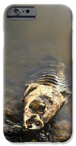 Water Pollution iPhone Cases - Fish Killed By Water Pollution iPhone Case by Detlev Van Ravenswaay