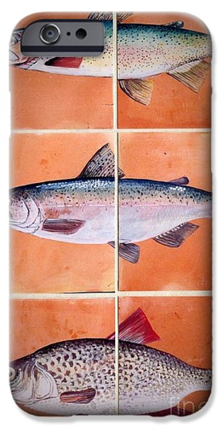 Illustrations Ceramics iPhone Cases - Fish Mural On Terracotta Tiles iPhone Case by Andrew Drozdowicz