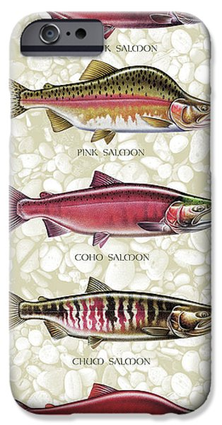 Streams iPhone Cases - Five Salmon Species  iPhone Case by JQ Licensing