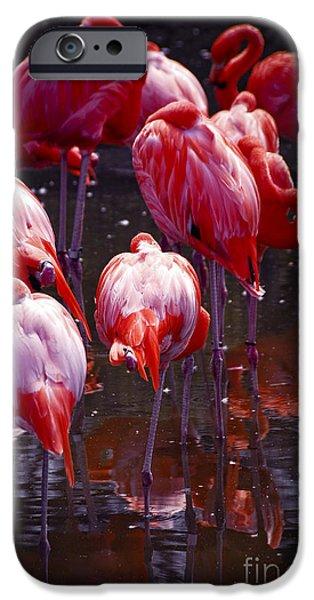 Flamingoes iPhone Cases - Flamingo iPhone Case by Elena Elisseeva