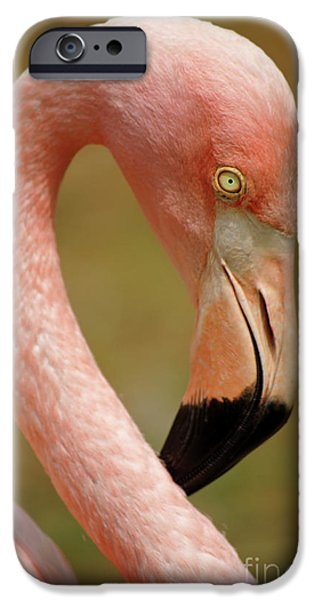 Aviary iPhone Cases - Flamingo Head iPhone Case by Carlos Caetano