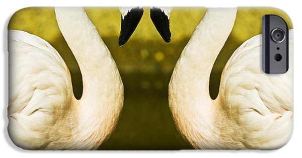Birds iPhone Cases - Flamingo reflection iPhone Case by Sheila Smart