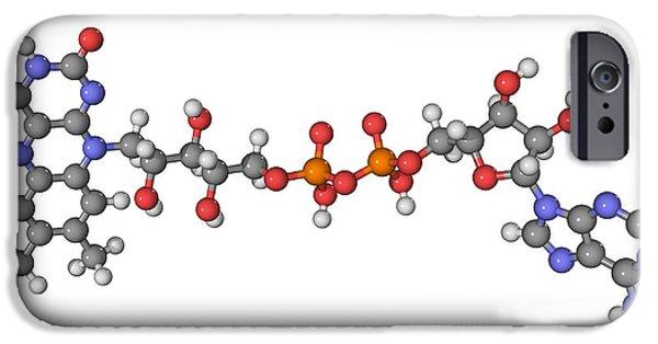 Coenzyme iPhone Cases - Flavin Adenine Dinucleotide Molecule iPhone Case by Laguna Design