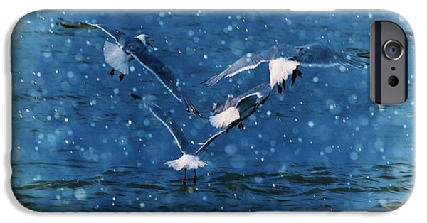 Seagull iPhone Cases - Flock  iPhone Case by Debra  Miller