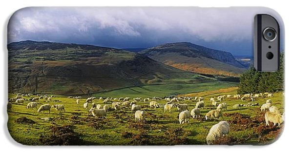 Field. Cloud iPhone Cases - Flock Of Sheep Grazing In A Field iPhone Case by The Irish Image Collection