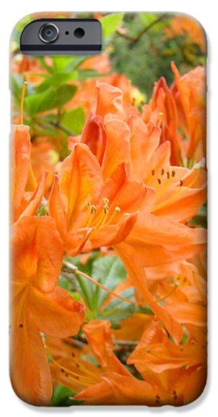 Floral art prints Orange Rhodies Flowers iPhone Case by Baslee Troutman