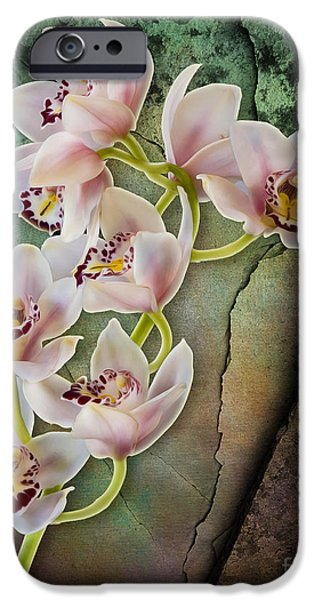 Garden iPhone Cases - Floral Passion iPhone Case by Susan Candelario
