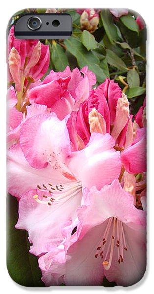 Floral Rhodies Photography Pink Rhododendrons prints iPhone Case by Baslee Troutman Photography Art Prints