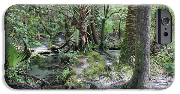 Tree Roots iPhone Cases - Florida Landscape - Lithia Springs iPhone Case by Carol Groenen