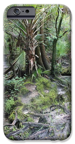 Florida Landscape - Lithia Springs iPhone Case by Carol Groenen