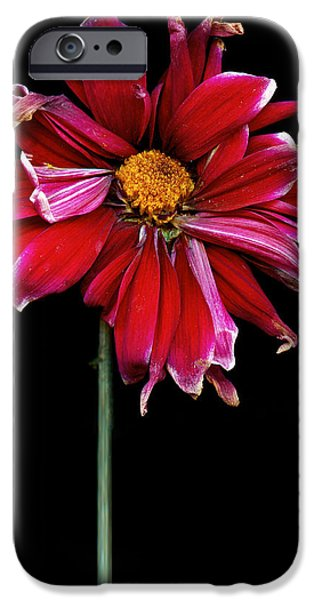Scanography iPhone Cases - Flower - Bad hair day  iPhone Case by Mike Savad