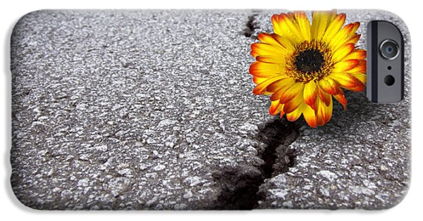 Close iPhone Cases - Flower in asphalt iPhone Case by Carlos Caetano