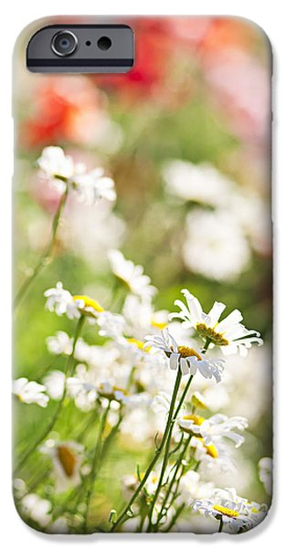 Meadow Photographs iPhone Cases - Flower meadow iPhone Case by Elena Elisseeva
