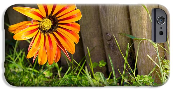 Candid Photographs iPhone Cases - Flower on fence iPhone Case by Carlos Caetano