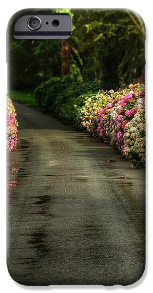 Flower Road iPhone Case by Svetlana Sewell