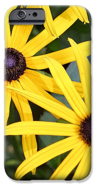 Flower Rudbeckia Fulgida In Full iPhone Case by Ted Kinsman