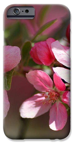 Flowering Crabapple Detail iPhone Case by Mark J Seefeldt