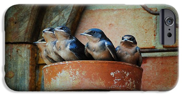 Baby Bird iPhone Cases - Flowerpot Swallows iPhone Case by Jai Johnson