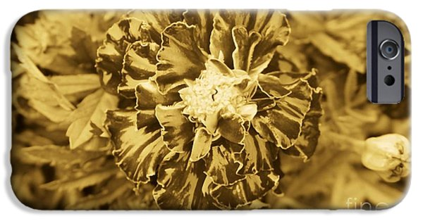 Sepia Flowers iPhone Cases - Flowers Are Not Sepia For a Reason iPhone Case by Ron Bissett