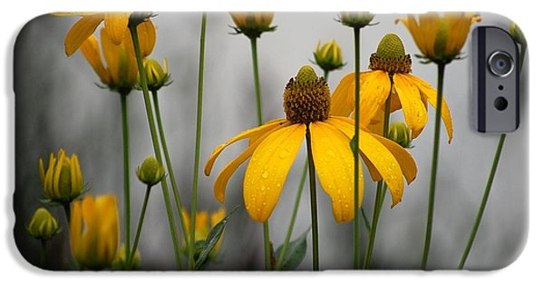 Cone Flowers iPhone Cases - Flowers in the rain iPhone Case by Robert Meanor
