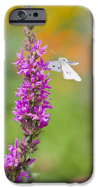 Fauna iPhone Cases - Flying Butterfly iPhone Case by Melanie Viola